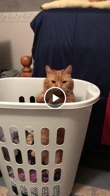 Gato Dançando nas roupas sujas
