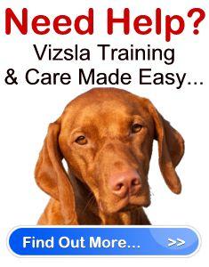 Housebreaking a vizsla puppy