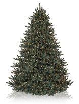 Balsam Hill Blue Spruce