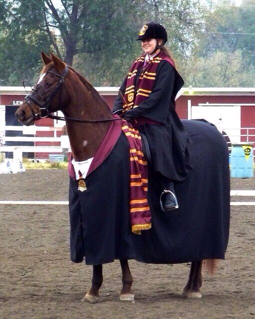 Ok, I wasn't going to pin this until I noticed the horse had freaking glasses!! Omg I'm dying!!