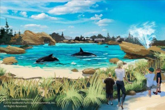 SeaWorld ampliará los hábitats para las orcas en sus parques | Informe21.com