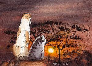 Sir wuschel os -Tierportraits gato e ilustrações de Christina Schulte