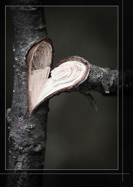 nature...: