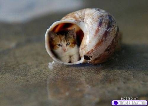The rare hermit cat!