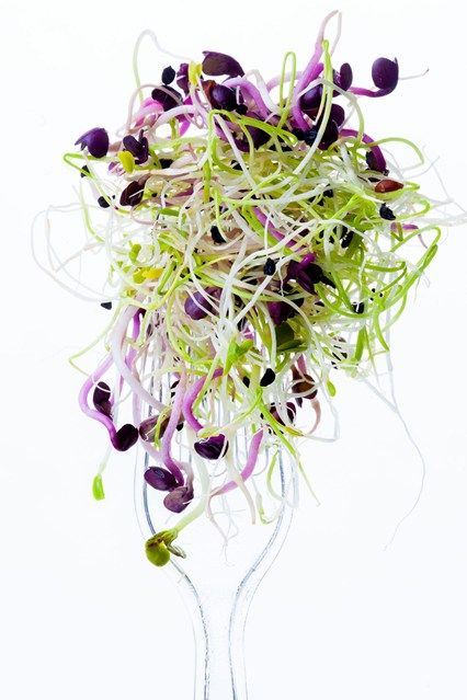 germes d'alfalfa