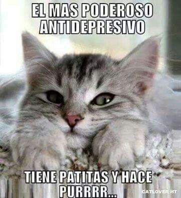 Gatos, antidepresivo.