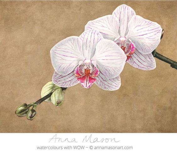 I experimented with a textured background in this painting to make this pale, delicate Phalaenopsis orchid stand out.
