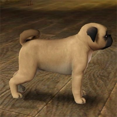 Improved Pug by chinarose93 - The Exchange - Community - The Sims 3