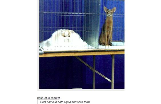 35 Hilarious Tumblr Posts That All Cat Owners Know To Be True (Slide #48) - Pawsome