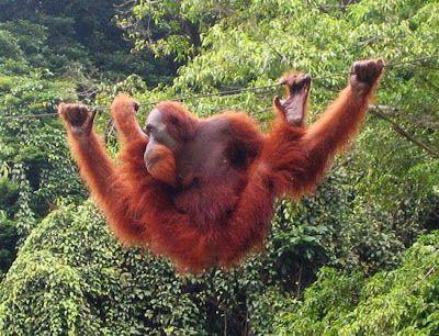 Crónicas de un Mundo en Conflicto - 15 animales en peligro de extinción