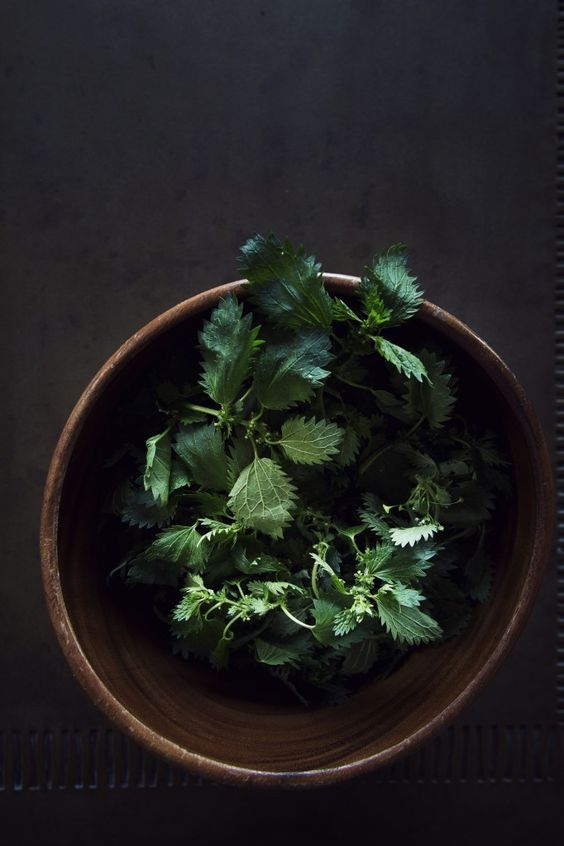 ... Stinging Nettle Soup - I think I'll try this when the ramps come up