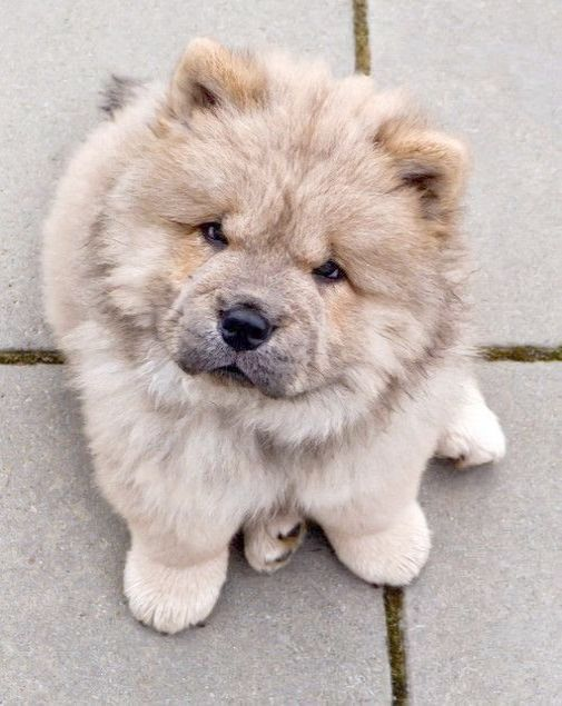 Amazing Kittens For Sale Near Me Valuable Fluffy Dog Breeds