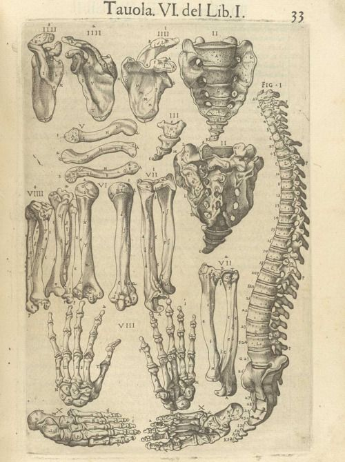 Anatomia del corpo humano, Rome, 1560    Juan Valverde de Amusco