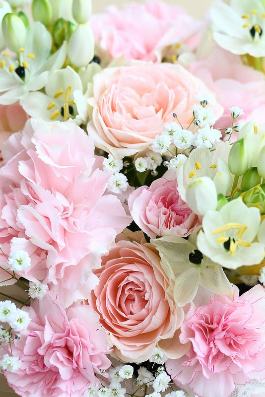 +919582148141 We have beautiful flowers & Gifts which are sending to your friends, relatives and family members. you can also send soft toys, delicious cakes, chocolates Send Flowers to Delhi & All Over World through Online Florist Delhi.