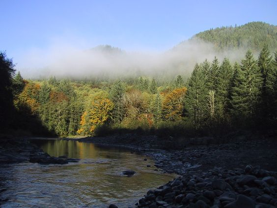 Fall on the Wilson River in the Oregon Coast Range.  Heaven on earth!