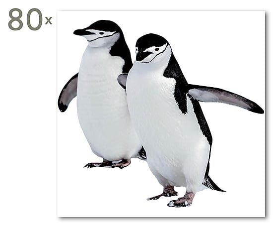 Servietten Penguin, 80 Stück, 33 x 33 cm
