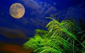luz da lua cheia
