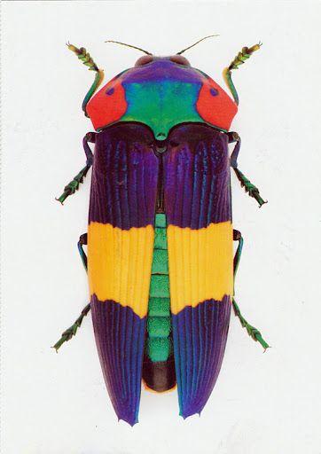 beetle: