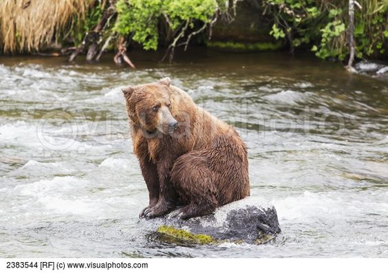 Grizzly Bears And Fall Colours Denali National Park Alaska | Stock ...