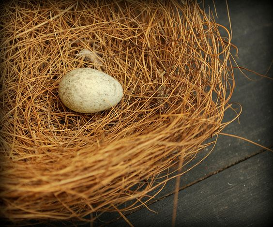 egg in a nest by firefly64, via Flickr