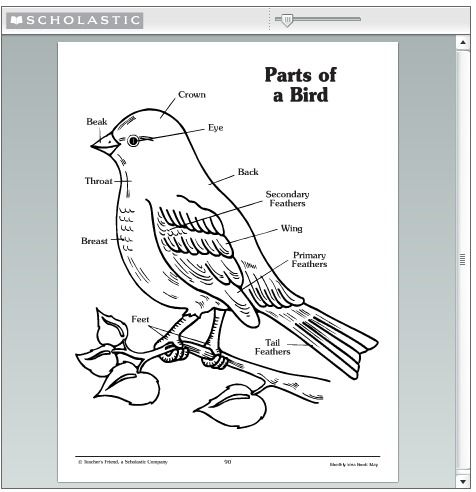 bird identification the parts of a bird to look at to make it easier to identify birds. Black Bedroom Furniture Sets. Home Design Ideas