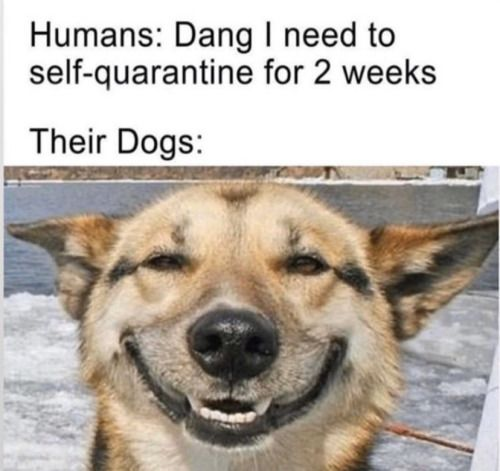 Best Laugh Quotes Memes Ever You Will Die With Laugh For Humour Quotes And Memes You Will Get A Lot Of Comedy Quotes A Dog Jokes Funny Dog Memes Animal