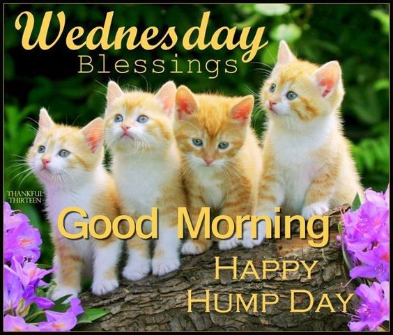 Wednesday Blessings Good Morning good morning wednesday hump day wednesday quotes good morning quotes happy wednesday good morning wednesday wednesday quote happy wednesday quotes: