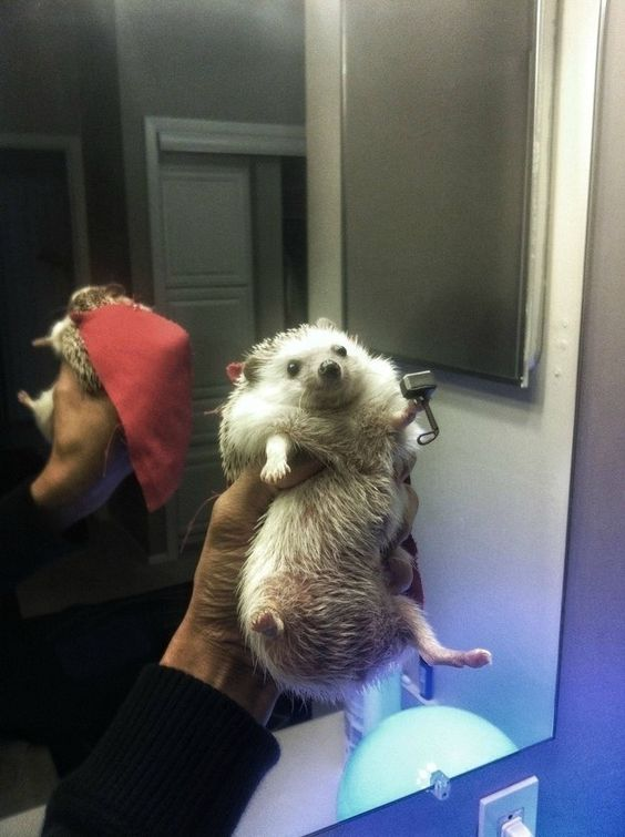 A happy hedgehog dressed as Thor. | 41 Pictures You Need To See Before The Universe Ends: