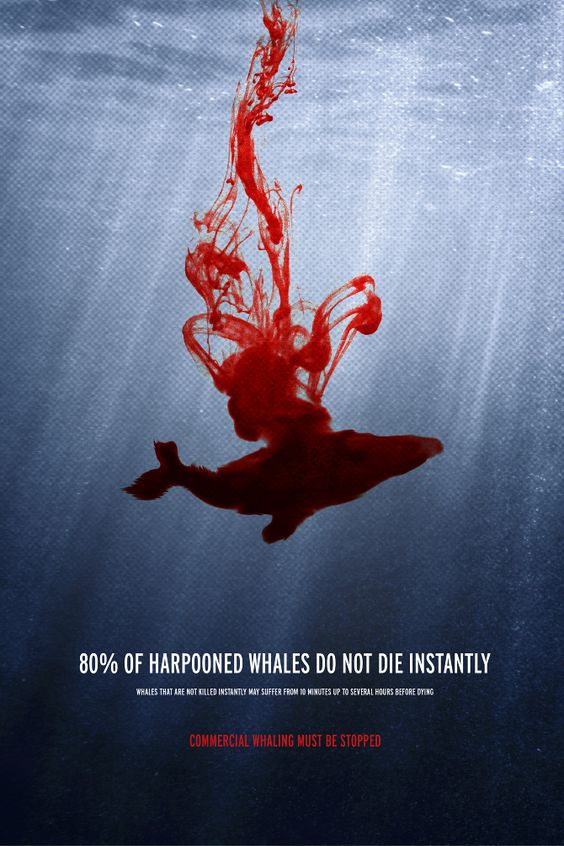 The controversial issue of whaling and the whale industry