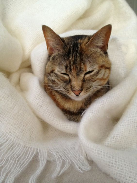 wrapped up