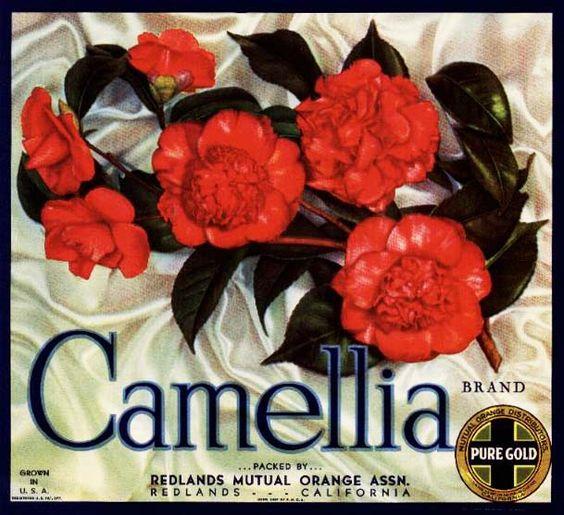 Camellia Citrus Fruits. #crateart