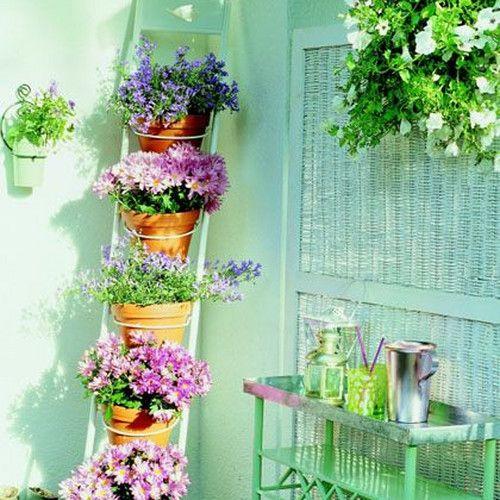 Fuksja Flower Garden Balcony Garden Plants