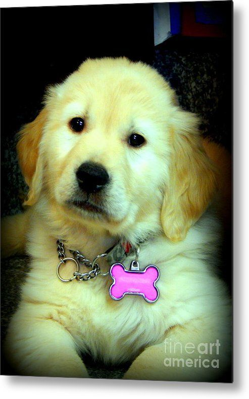 Adorable Photo By Karen Cook Photography Animals Dogs Puppies Golden Puppy Cute Dogs Dogs