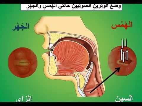 صفات الحروف التي لها ضد 1 أيمن سويد Youtube Islam Facts Facts Youtube
