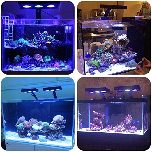 Amazon Com Hipargero Led Aquarium Light 30w Aquarium Led Lights Saltwater Lighting With Touch Control And Led Aquarium Lighting Aquarium Lighting Aquarium