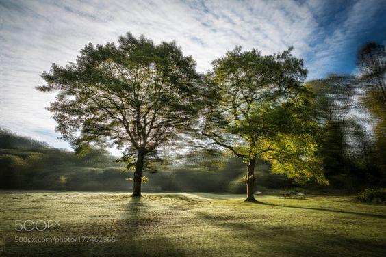 Backlit Trees by EdMorris. @go4fotos