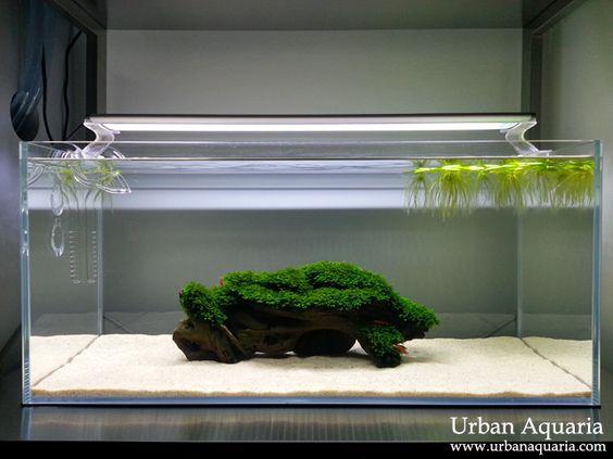 Urban Aquaria: March 2013