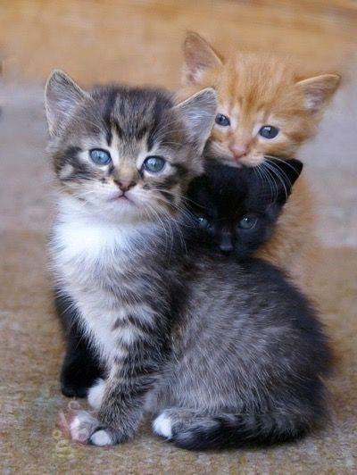 Too cute !! Or do I mean three ?