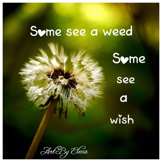What do you see a weed or a wish?