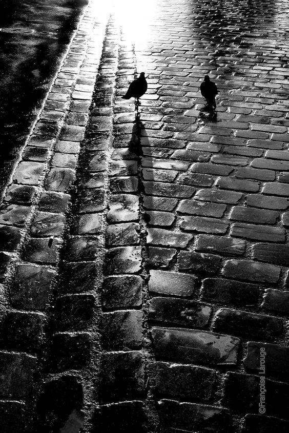 francoise-larouge:  Pigeons du matin sur pavé parisien - Photo ©2014 Françoise Larouge