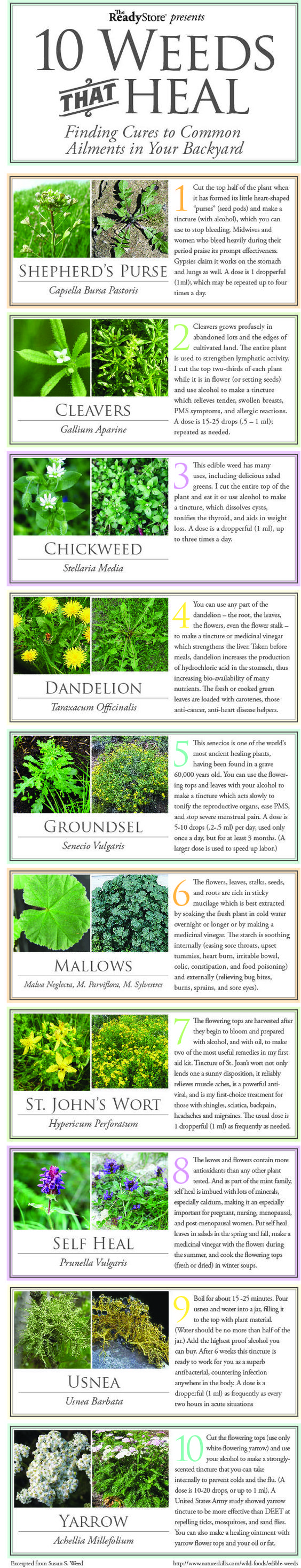 10 Weeds That Heal - A Herbal Medicine Chest in Your Backyard... | http://www.ecosnippets.com/gardening/10-weeds-that-heal-a-herbal-medicine-chest-in-your-backyard/