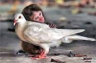 grappige apen - Google zoeken