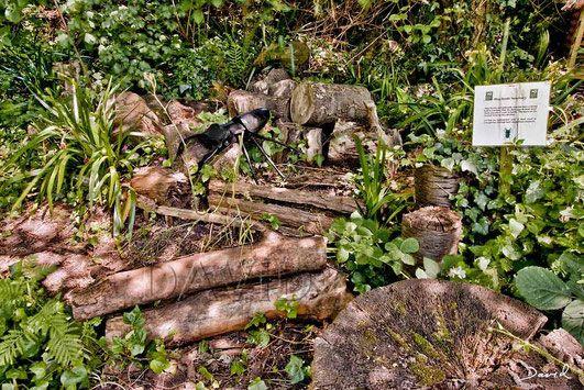 Totholz Im Naturgarten Das Englische Vorbild Eines Kaferbeets Naturgarten Garten Garten Ideen