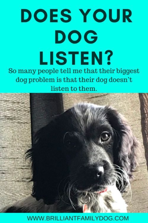 My Dog Doesn T Listen To Me Positive Dog Training Family Dogs Aggressive Dog