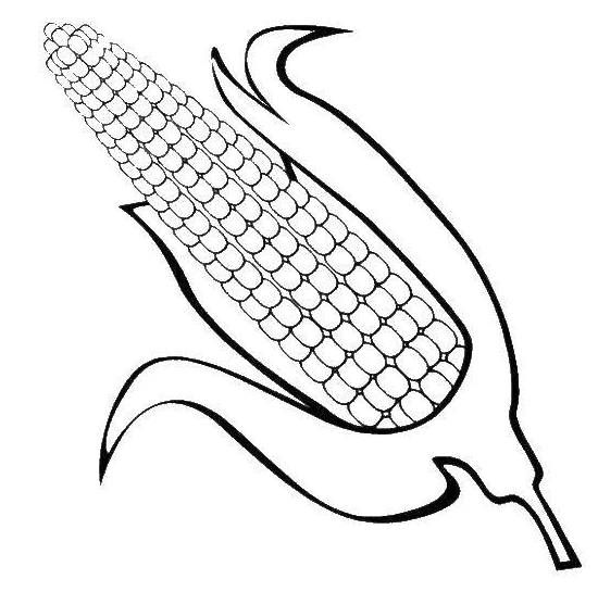 Ear Of Corn Coloring Page For Kids Vegetable Coloring Pages Food Coloring Pages Coloring Pages For Kids