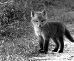 Nawwwww.......baby fox :)