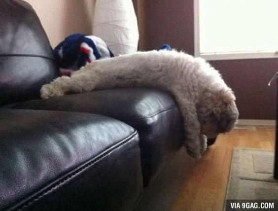 Sleeping pets #dog #sofa