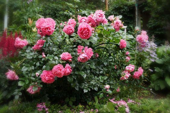 чудесный сад - Самое интересное в блогах