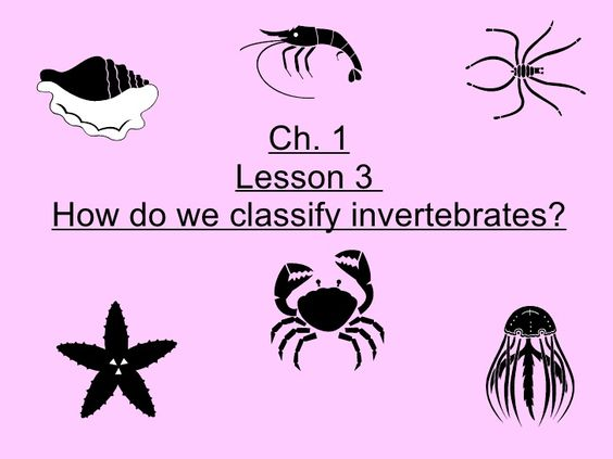 5th-grade-ch-1-lesson-3-how-do-we-classify-invertebrates by Ryan Hinsz via Slideshare