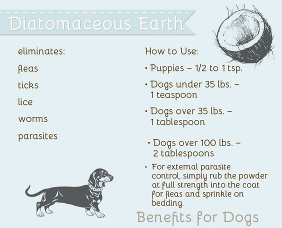 The Pet Anthology | Health Benefits of Diatomaceous Earth - eliminates fleas and ticks! #health #pets #lifestyle: